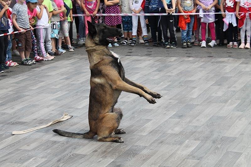 policia.ploshcha28